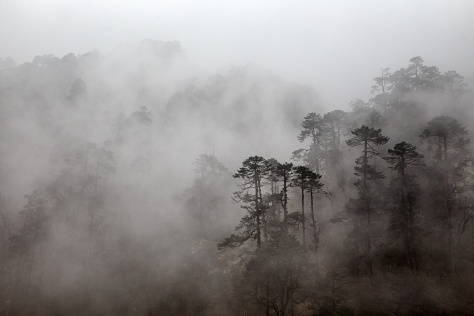 The mountainsides around Khote are covered by beautiful trees that reverberate a mystical quality in the afternoon fog.
