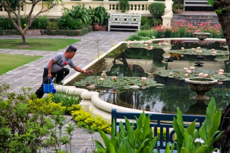A maintenance worker at the Garden of Dreams pauses to photograph the lotus flowers. © Luke Mislinski